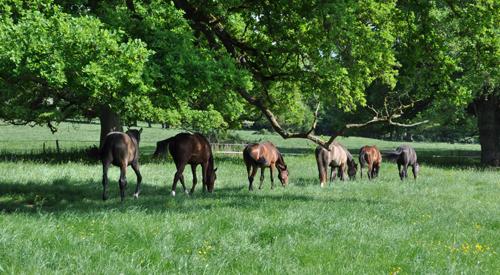 Commerce et élevage de chevaux en France