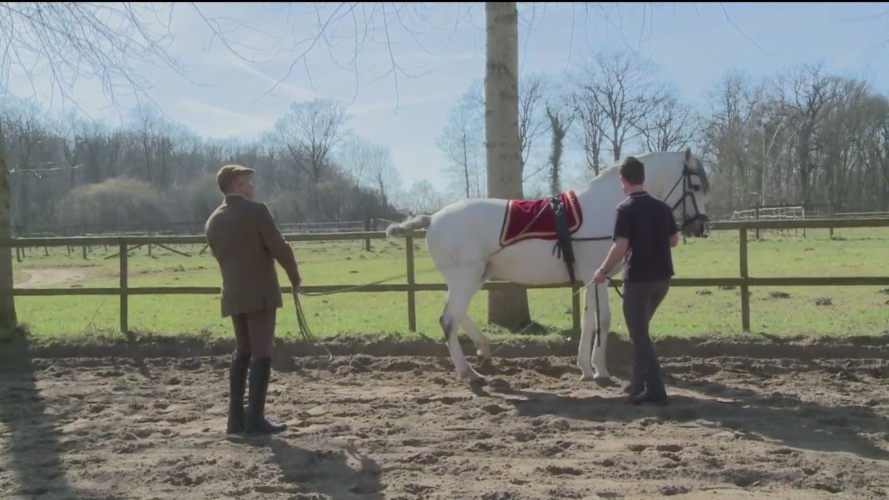 L'art de communiquer avec les chevaux par Jacquemin Piel