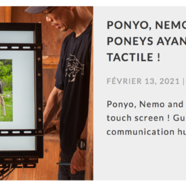 Ponyo, Nemo et Thomas, les premiers poneys ayant appris à utiliser un écran tactile !