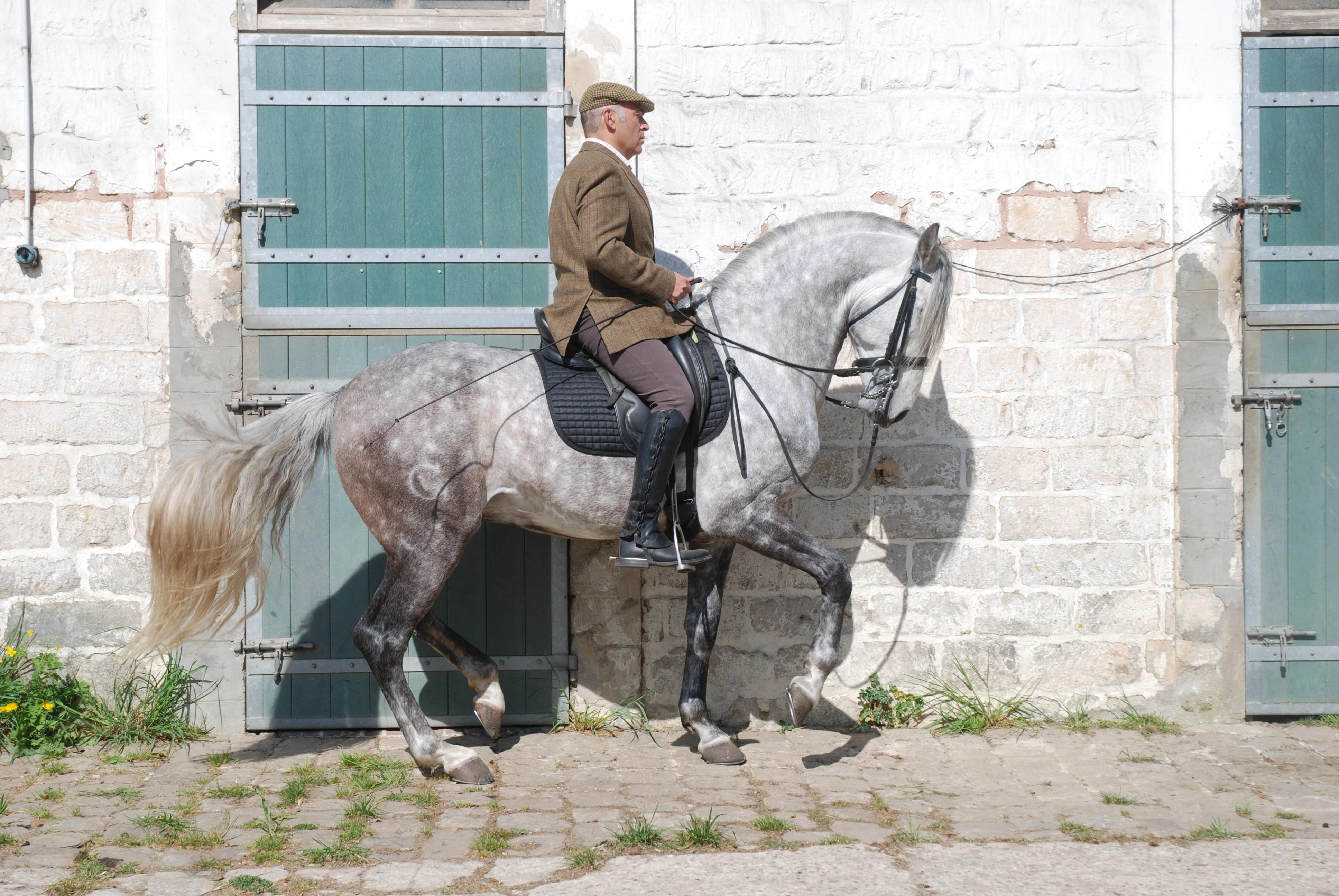 Un solfège de l'équitation, une approche inédite par Carlos Pereira dans Éthologie & Praxélogie n°19