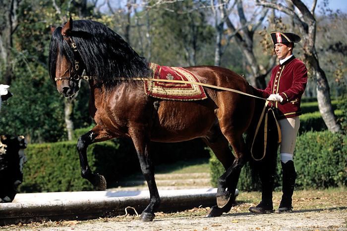 Naissance et Renaissance de l'équitation portugaise, thèse de doctorat Sorbonne Paris III de Carlos Pereira disponible en ligne