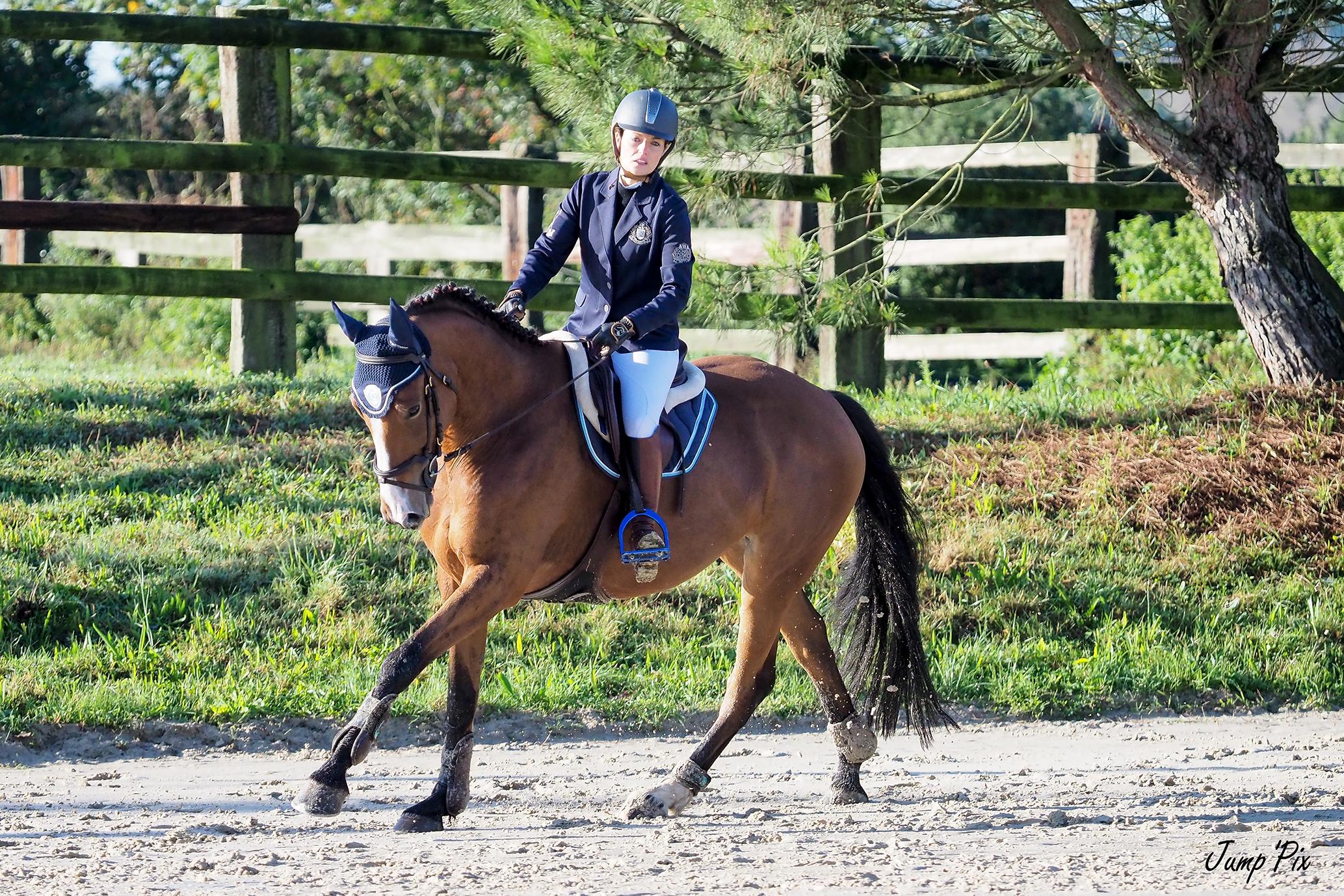 Évolution des chevaux de sport en photos