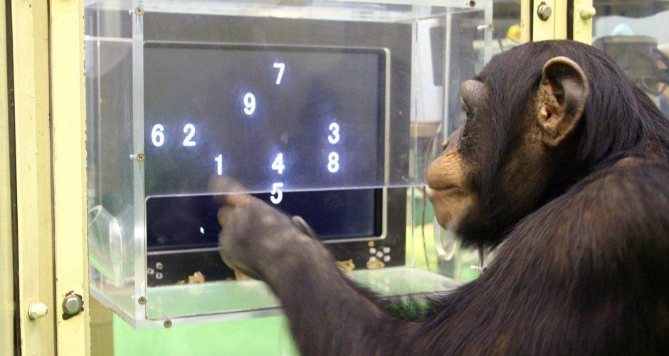 la-sci-sn-chimp-game-theory-humans-20140605