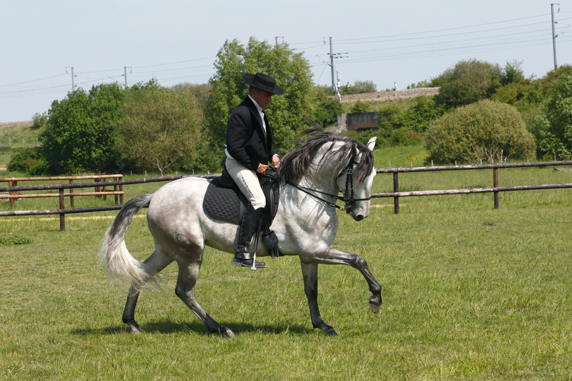 Nouveau livre de Carlos Pereira : L'équitation classique, le langage des aides naturelles
