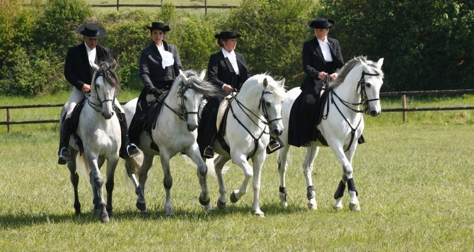 Unique formation équitation portugaise, arts du spectacle équestre, rentrée octobre 2016, places très limitées